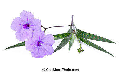 purple flower isolated on a white