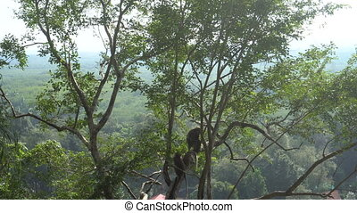 Monkeys sitting on the tree at tiger cave temple in Krabi,...