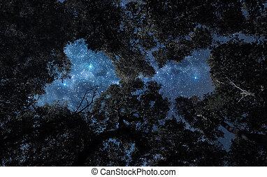 Night sky above treetops