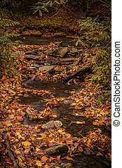 Fall in Great Smoky Mountains National Park - Small...