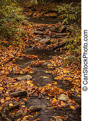 Fall in Great Smoky Mountains National Park - Small stream...