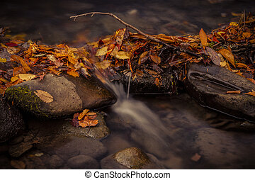 Fall in Great Smoky Mountains National Park - Close up of...
