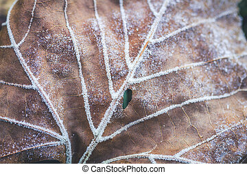 Fall in Great Smoky Mountains National Park - Frost with ice...