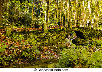 Fall in Great Smoky Mountains National Park - The Troll...