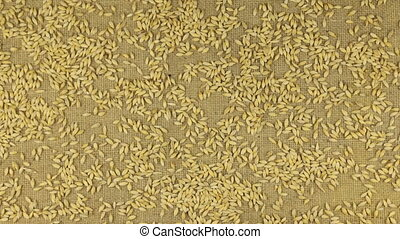 Approximation of barley grains scattered on burlap, top view