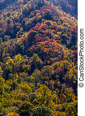 Fall in Great Smoky Mountains National Park - Colorful...