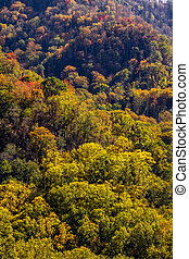 Fall in Great Smoky Mountains National Park - Mountain slope...