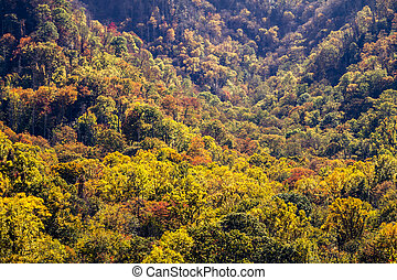 Fall in Great Smoky Mountains National Park - Mountainside...