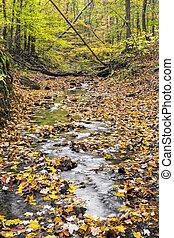 Autumn Woodland Creek - A small creek flows through an...