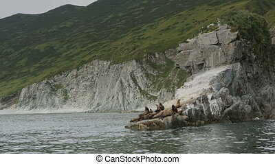 Rookery Steller sea lions. Island in Pacific Ocean near...