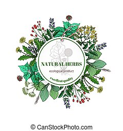 Hand drawn herbs and leaves label. Vector basil thyme,...