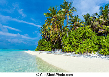 Palm trees leaning over sand beach, Maldives