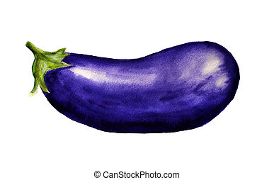 Eggplant - Watercolor image of eggplant on white background
