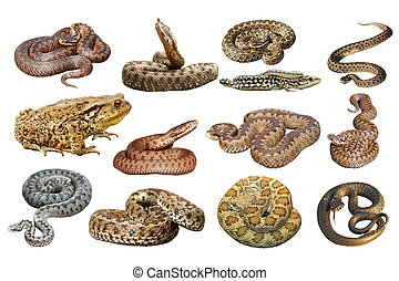 collection of herpetofauna over white - collection of...