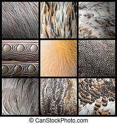 wild birds feathers collection, real textures