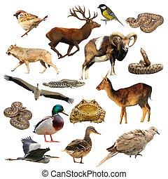 野生動物, 在上方, 白色, 彙整