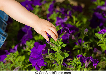 Toddler touching purple flowers