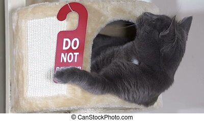Funny gray cat inside beige cat tree house condo with hanger...