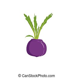 Fresh Beetroot Bright Color Isolated Illustration....
