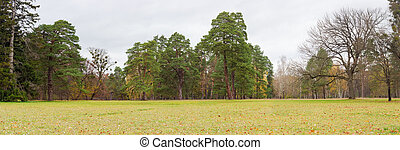Glade in park on background of conifers and deciduous trees...