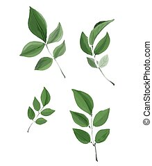 Watercolor isolated vector leaves - Green watercolour...