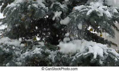 footage Snow falls from fir. slow motion 120 fps. Full HD...