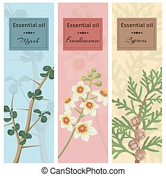 Essential oil set collection. Myrrh, frankincense, cypress...