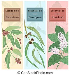 Essential oil set collection.