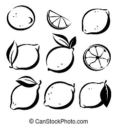 set of lemons and lime vector symbols in sketch style