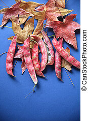 Autumn leaves and cranberry beans - Colorful cranberry beans...