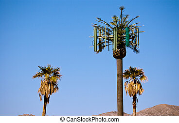 Cellular phone antenna towers disguised as a palm tree