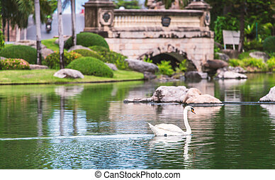 White swan swimming in public lake