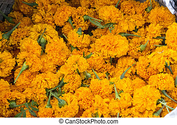 Marigold heads for sale used for Hindu Puja/holy ceremonies
