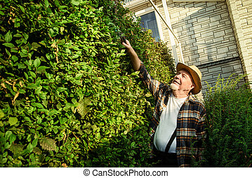 landscaping - Senior man trimming garden plants. Gardening...