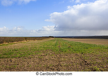 yorkshire wolds agriculture - a large harvested field in...