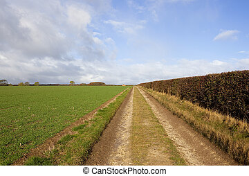 farm track with hedgerow - a straight farm track beside a...