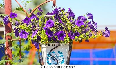 blue flowers in a vase in the home garden