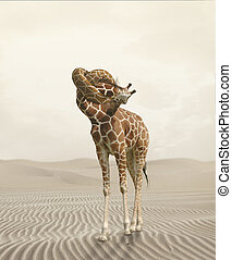 giraffe with knot in the neck