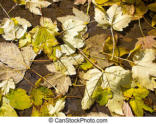 Top view of a wet autumn leaves in a dirty pool of water on...