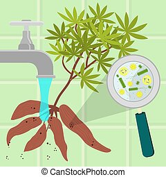 Washing contaminated manioc - Contaminated manioc being...