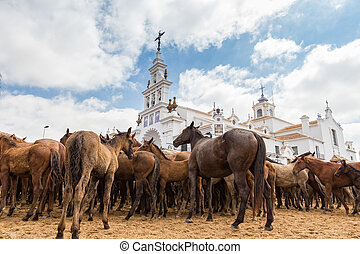 Waiting for of horses in front the church baptismal ritual....