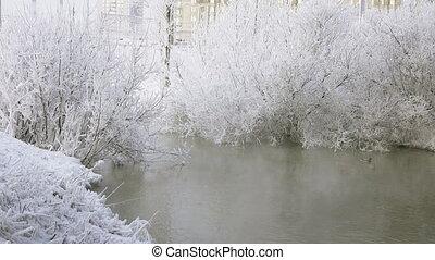 Wild ducks in the winter river,