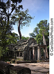 Ta Prohm Temple, Angkor, Cambodia - Classical picture of Ta...