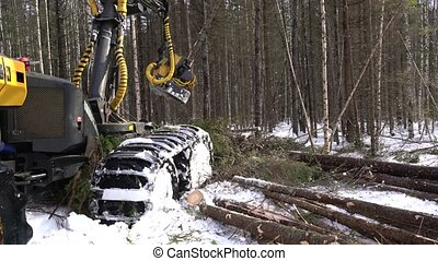 View of log loader busy working in forest - Forestry. View...