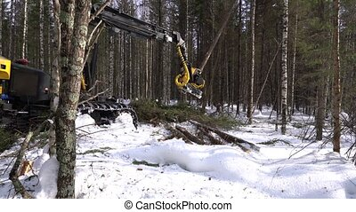 Forestry. View of logger cuts spruce trunk - Forestry. View...