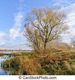 Willow Close to the Dnieper River - Willow tree close to the...