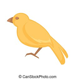Canary bird. Isolated on white background - Canary bird....