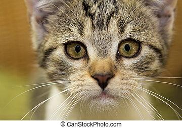 Close up of an adorable kitten. - Close up of an adorable 12...