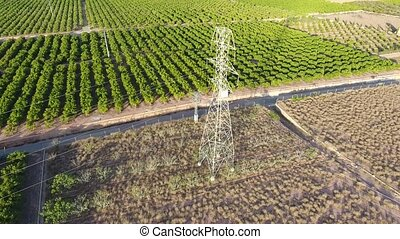 Flying orange fields and electric tower - Orange tree field...