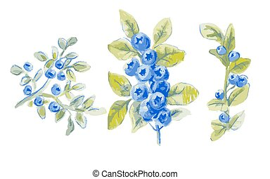 vector sprigs of blueberries, set of drawing by watercolor,...